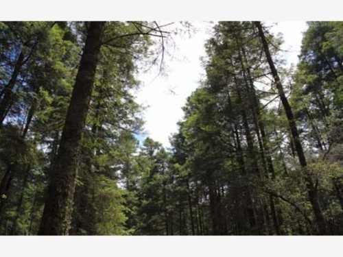 terreno en venta a credito en el bosque