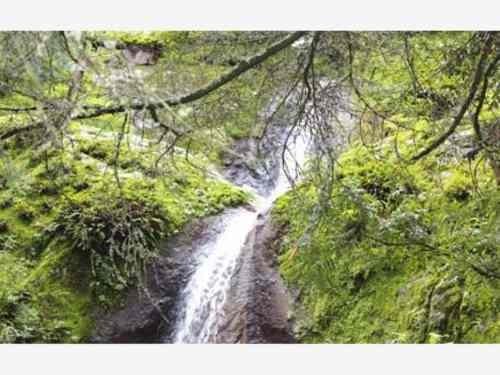 terreno en venta bello lugar con la mejor zona boscosa del estado de hidalgo.