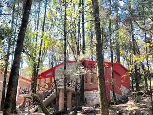 terreno en venta bosque en pueblo magico mineral del monte, y la cabaña de tus sueños