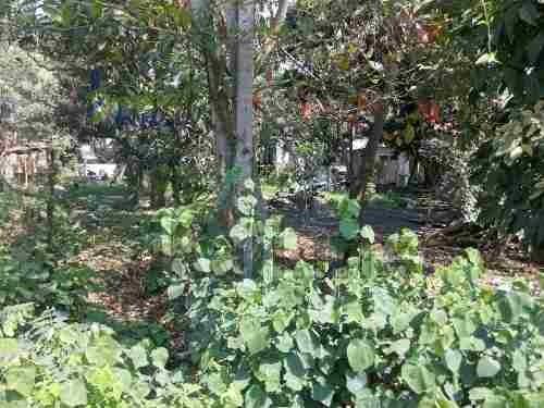 terreno en venta col universitaria en tuxpan, veracruz 285 m², se encuentra ubicado en la calle emiliano zapata de la colonia universitaria, muy cerca de la facultad de agronomia y biología de la uni