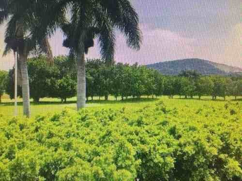 terreno en venta con uso de suelo habitacional en jiutepec morelos, hda. de san