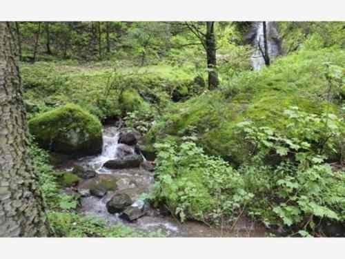 terreno en venta contruye tu cabaña en zona boscosa, el lugar de ensueño