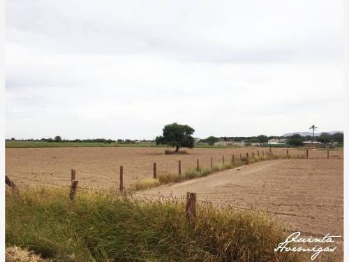 terreno en venta ejido hormiguero