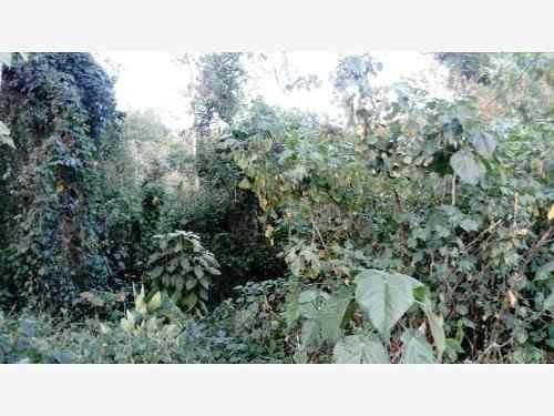 terreno en venta el bosque