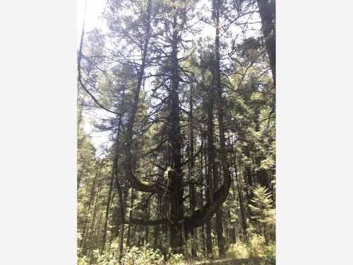 terreno en venta el bosque a credito, hasta 24 meses sin intereses, posesión inmediata