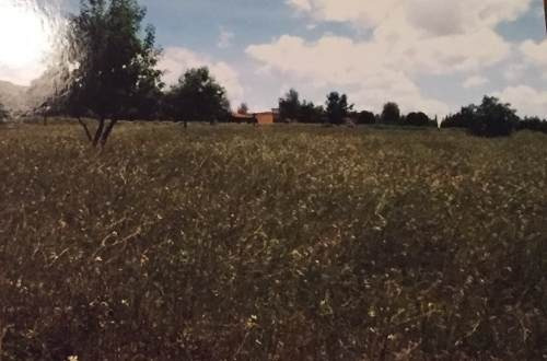 terreno en venta el jiadi hidalgo predio 2