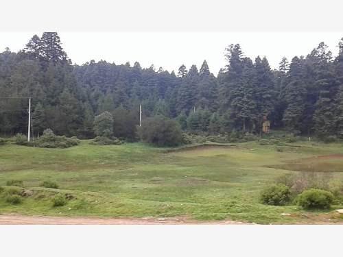 terreno en venta el mejor bosque para invertir! lotes en facilidades
