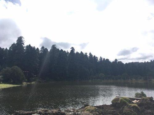 terreno en venta el mejor lugar para vivir en la tranquilidad del bosque