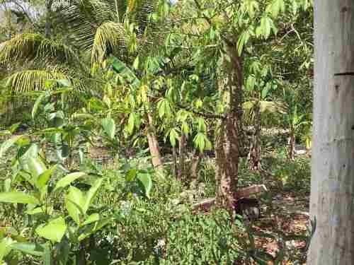 terreno en venta en akumal 110 hectareas