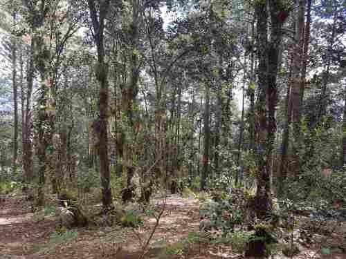 terreno en venta en alcanfores