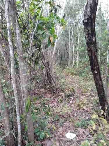 terreno en venta en alfredo bonfil, cancun c2298