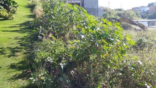 terreno en venta en burgos bugambilias. 599m2. l46
