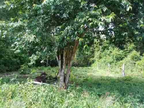 terreno en venta en el faisán, huatulco, oaxaca