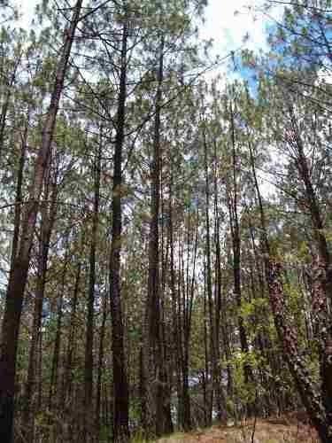 terreno en venta en fracc. pinos de mazamitla.