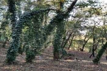 terreno en venta en olinalá, monterrey