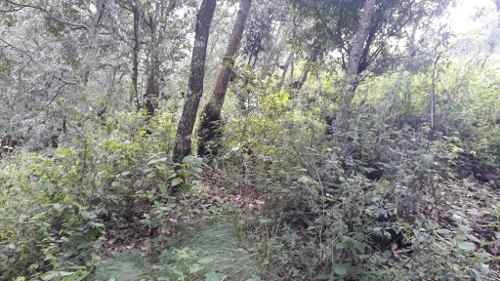 terreno en venta en san nicolas