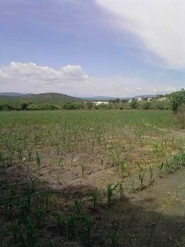 terreno en venta en xoxocotla morelos