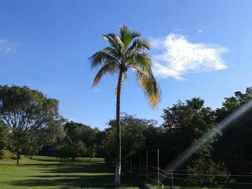 terreno en venta en zapata colonia campo nuevo
