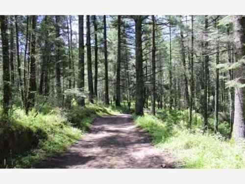 terreno en venta en zona boscosa, ideales para construir tu cabaña de descanso