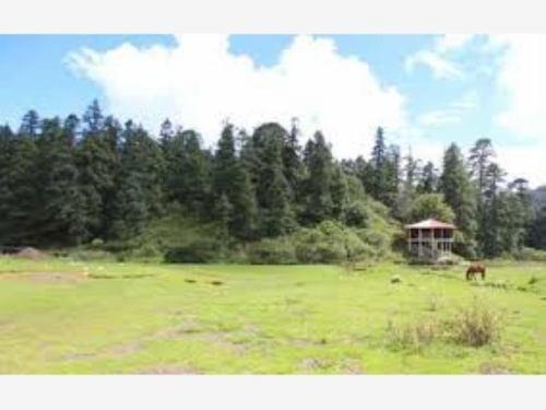 terreno en venta fracc campestre en zona boscosa, hermoso
