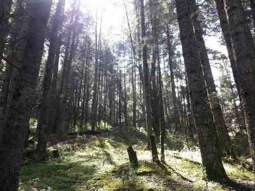 terreno en venta fraccionamiento campestre en real del monte