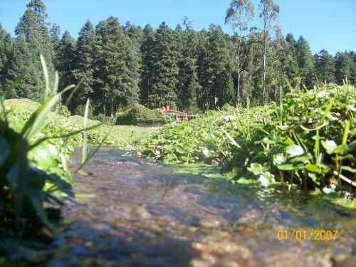 terreno en venta fraccionamiento en zona boscosa, un lugar hermoso que enamorara tus sentidos.
