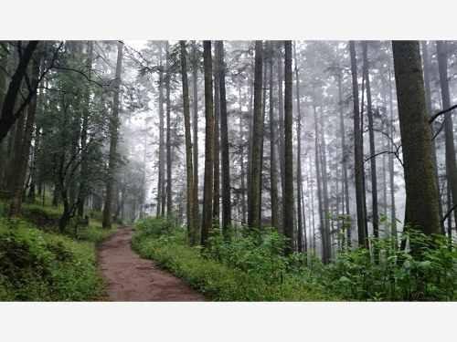 terreno en venta ideal para olvidarte del estrés, lotes en bosque relajante