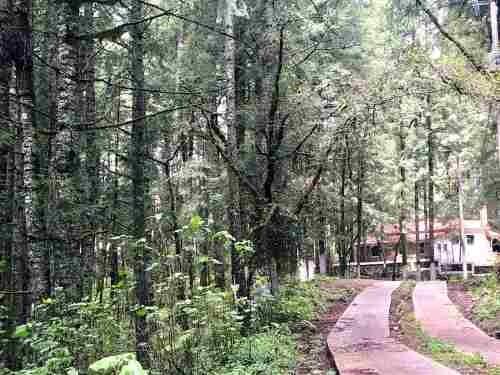 terreno en venta invierte en el mejor fracc campestre residencial en el bosque de real del monte