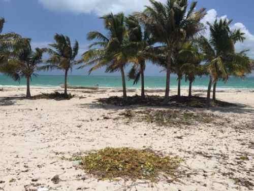 terreno en venta - isla blanca