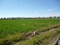 terreno en venta - la griega - te134