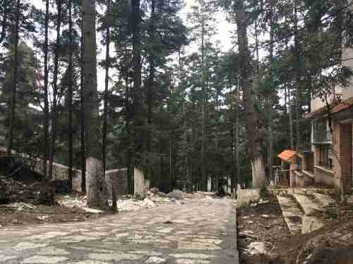 terreno en venta la mejor zona boscosa del estado de hidalgo.