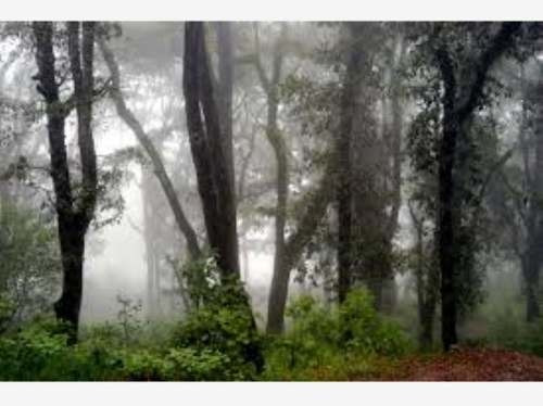 terreno en venta la zona boscosa del pueblo mágico de real del monte.