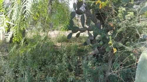 terreno en venta los pirules taxhido, tepeji del rio de ocampo