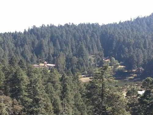 terreno en venta lotes campestres residenciales en zona boscosa. real del monte