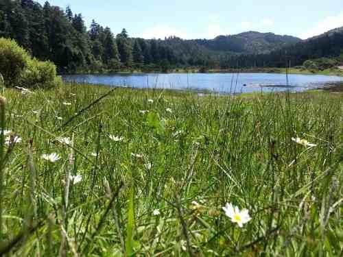 terreno en venta maravilloso fracc privado en zona boscosa, damos crédito
