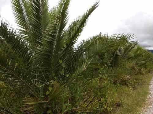 terreno en venta municipio de  tlapizalco toluca