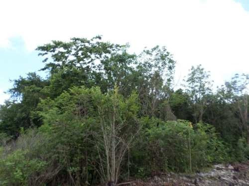 terreno en venta muy cerca de av. huayacan y resd. arbolada c2255