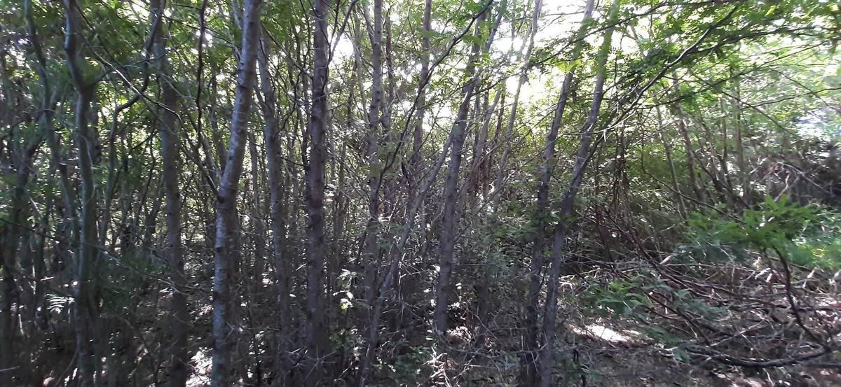 terreno en venta olivera luján lote 12