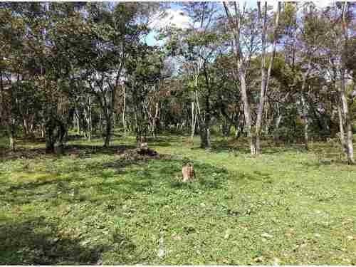 terreno en venta palenque palotal