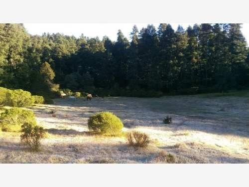 terreno en venta rodeado por zona boscosa,