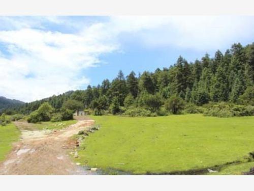 terreno en venta ubicados en zona boscosa, ideales para construir tu cabaña de descanso