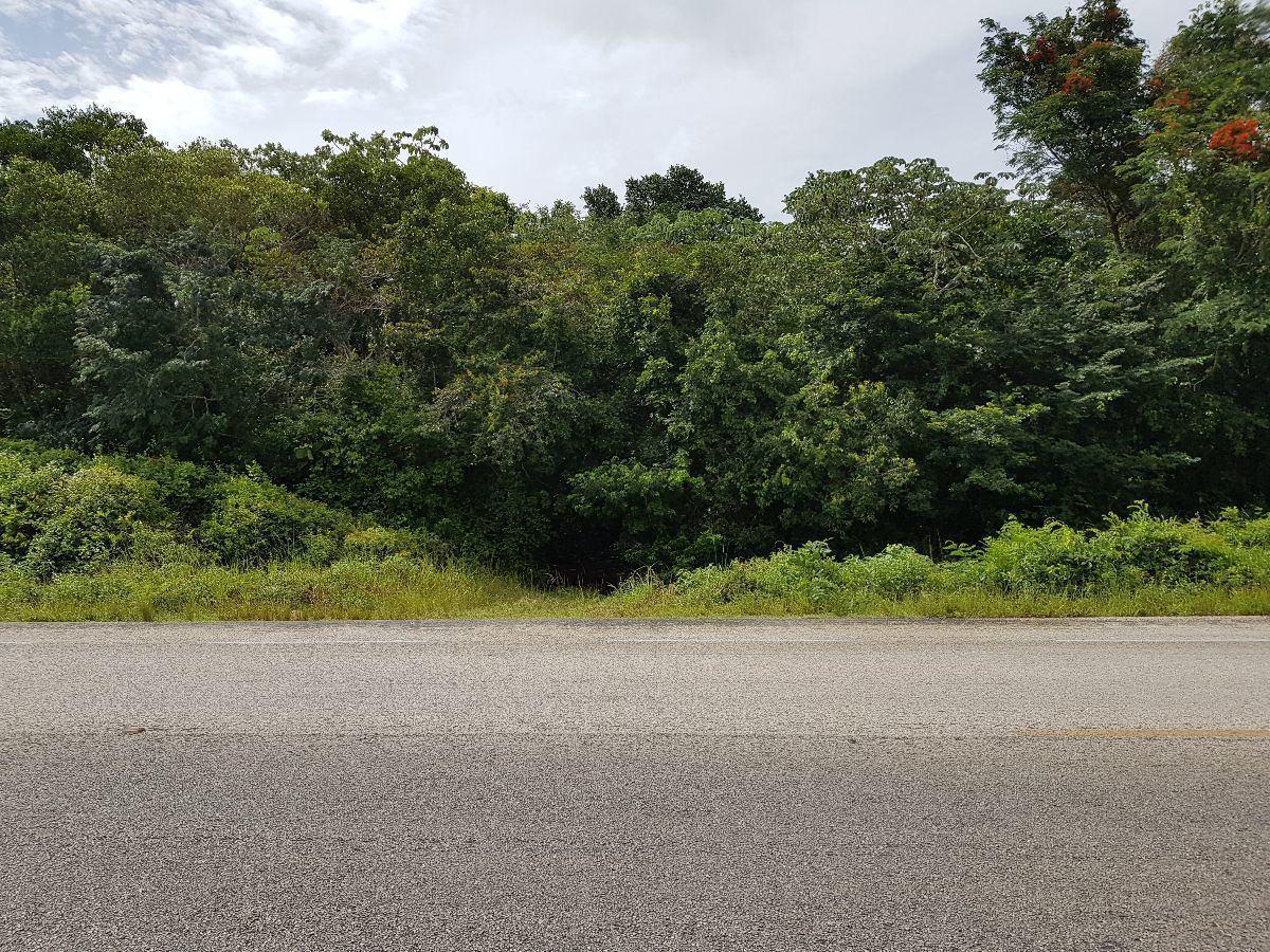 terreno en venta una hectárea frente a carretera cerca de carrillo puerto