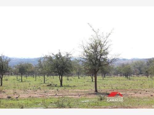 terreno en venta venta 4.7 hectareas, carretera comala, pueblo màgico, la caja, colima