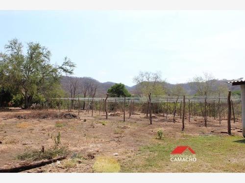 terreno en venta venta; 7 hectáreas en la caja, comala, colima; sembradas de mamey