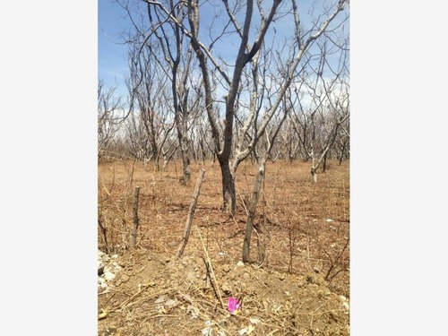 terreno en venta zacualpan de amilpas
