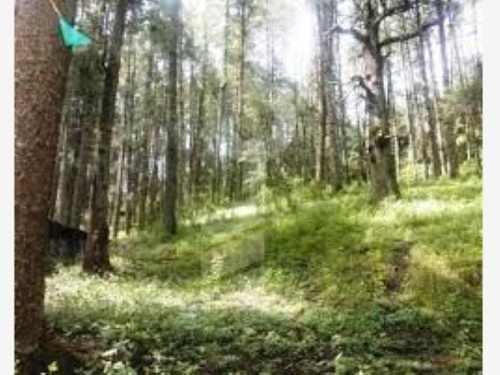 terreno en venta zona boscosa, un lugar hermoso que enamorara tus sentidos.