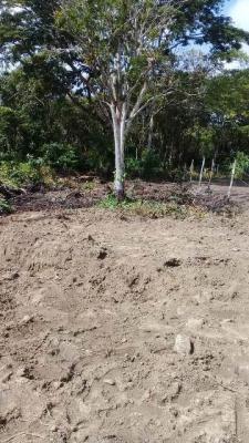 terreno escriturado. na praia, r$13 mil + parcela. aproveite