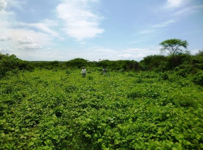 terreno fértil en el valle de sullana, departamento de piura