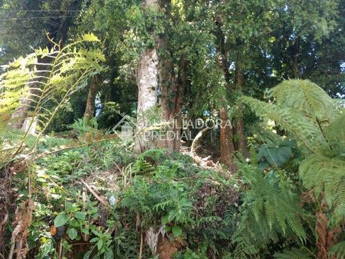 terreno - floresta - ref: 250619 - v-250619