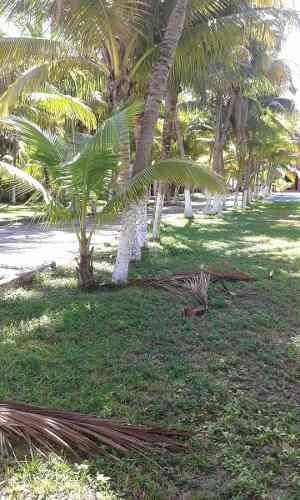 terreno frente a la playa en venta- puerto morelos